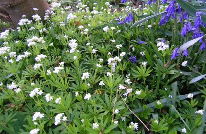 Plant of the Month – May