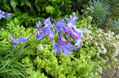 Plant of the Month – August