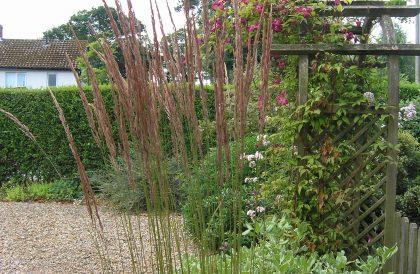 Fabulous Calamagrostis