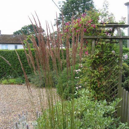 JJ Designs-Garden Design Suffolk-Calamagrostis