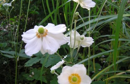 Plant of The Month – September17