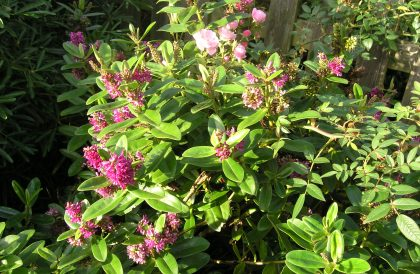 Plant of the Month – November