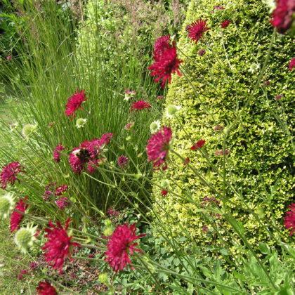 Garden Design Suffolk Kanutia