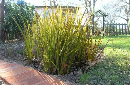 Plant of the Month March