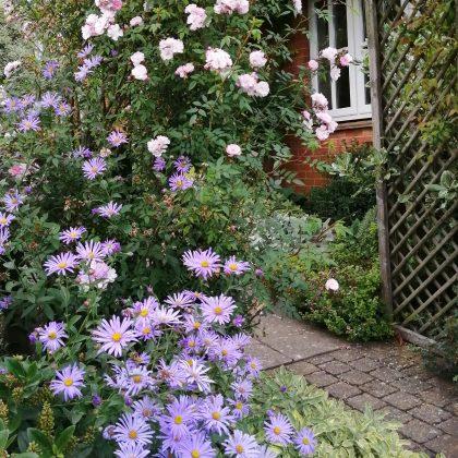 JJ Garden Design Suffolk Autumn Interest Plants